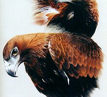 Wedge tailed eagles. by Heidi Schwandt Garner