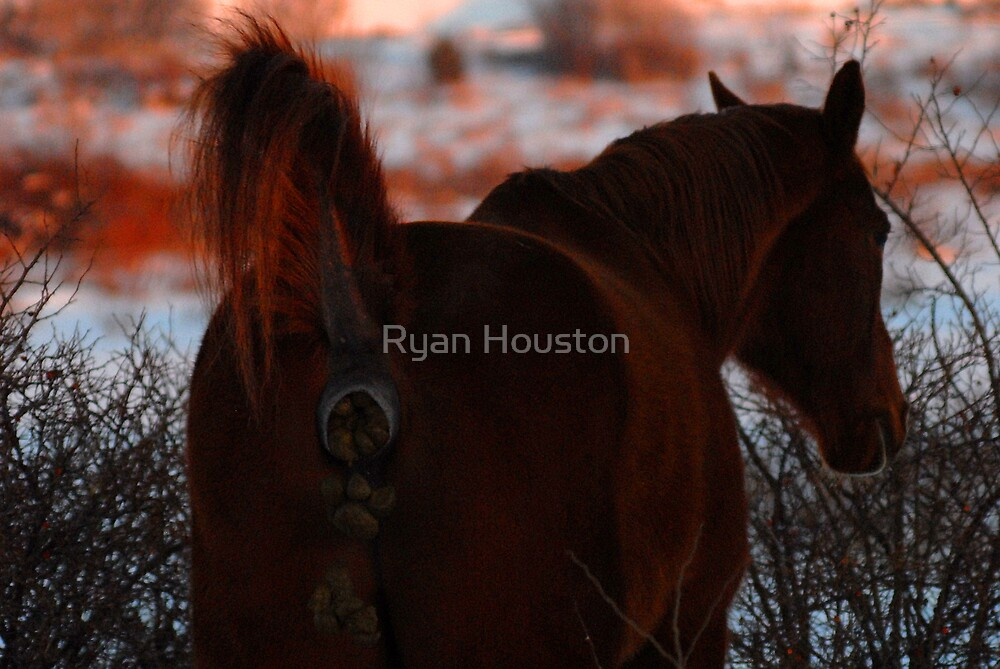 Don't be a horse's a@#!!! by Ryan Houston