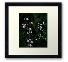 0450 - HDR Panorama - Wee flowers Framed Print