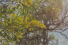 Wattle Photo Painting by Elaine Teague