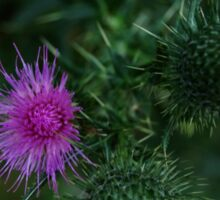 0477 - HDR Panorama - Thistles Sticker
