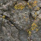 Lichen on the Rocks by Michael Norris