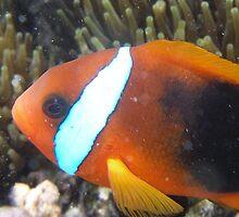 Nemo! by Steve Bullock