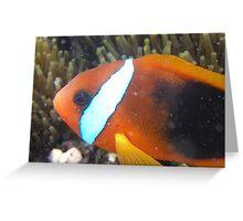 Nemo! Greeting Card