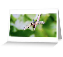 Dragonfly with Bumble Bee markings - 2 - Laguna Whitsundays Greeting Card