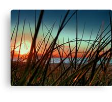 Sunset Grass. Canvas Print