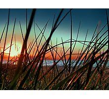 Sunset Grass. Photographic Print