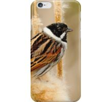 Reed......Bunting iPhone Case/Skin
