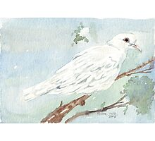Little White Dove painting Photographic Print