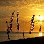 Golden Sea Oats by Rosie Brown