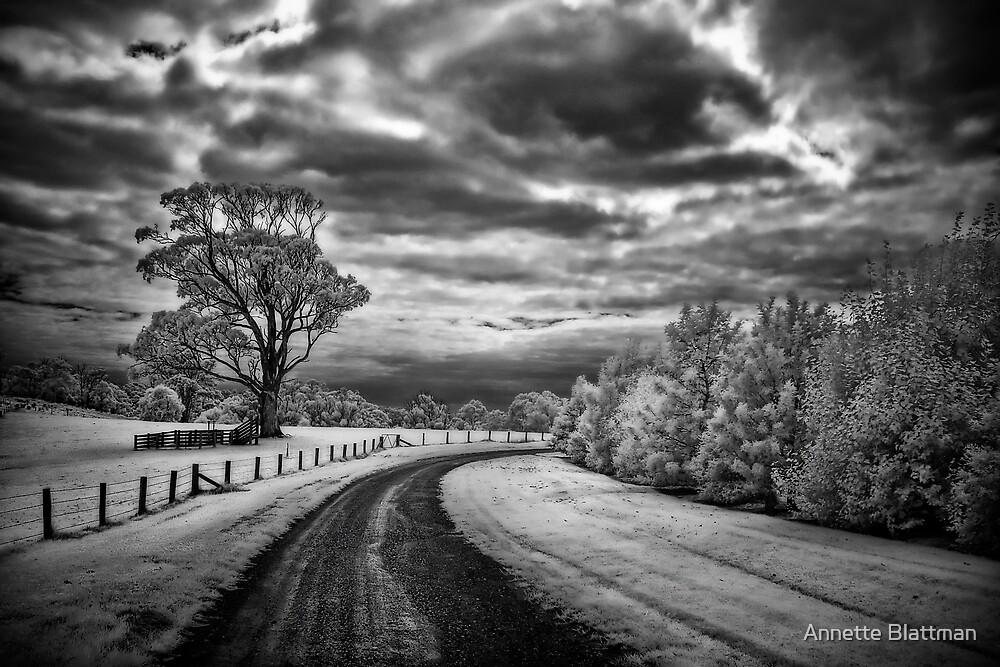 Country Road by Annette Blattman