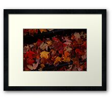 0557 - HDR Panorama - Autumn Fallen Leaves Framed Print