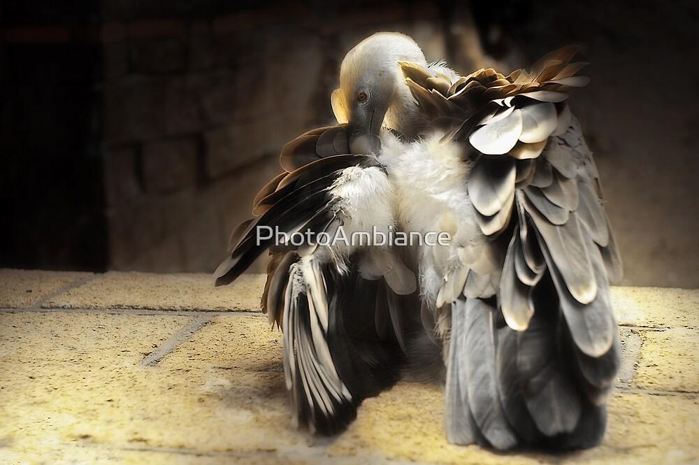 Griffon Vulture by PhotoAmbiance