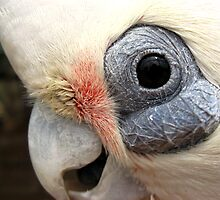Do not feed the parrot!!! by Ian Batterbee