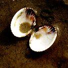 sea shell by Kacholek