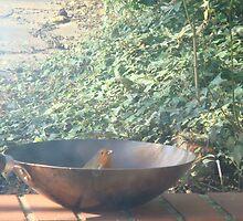 robin in wok by SHEZ1