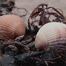 Shells Apart by Carl Hart
