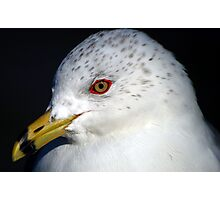 Seagull Upclose Photographic Print
