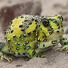 Crucifix Toad by Dave Fleming