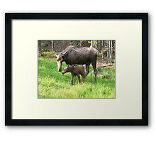 moose and baby moose Framed Print