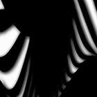 Zebra Like by Lisa  Marie Peaslee