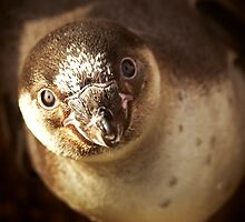 Baby Penguin by nayamina
