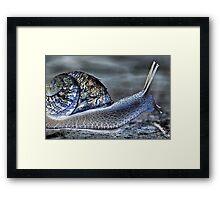 Snail's Pace Framed Print