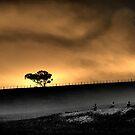 Silent Night by Neophytos
