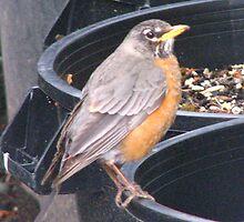 Bird and Trash by vivianlea