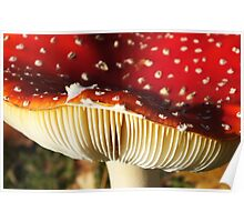 Inverted Fly Agaric Poster