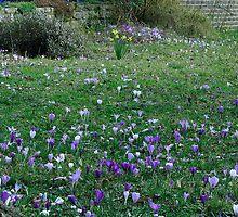 Spring has sprung by Sharon Perrett