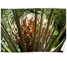 Cycad - life on earth Poster