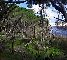 Bournda National Park, New South Wales by EllenMaree