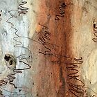 Scribbly Gum by Kim Roper