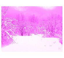 Pink Pop of Winter  by Maureen Zaharie