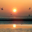 Sun-dance by ClaireTiltman