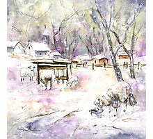 Sheep In Snow In Germany Photographic Print