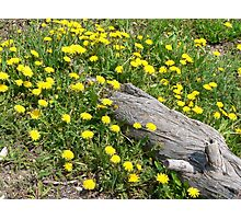 flowering log Photographic Print