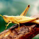 The Grasshopper   by Eugenio
