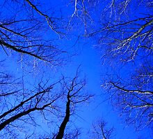 Woodland Sky View by Victoria Ashman