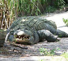 big gator by kevint