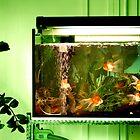 Grandma's Goldfishes by Amelia Rhea