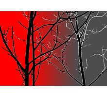 Red And Gray Photographic Print