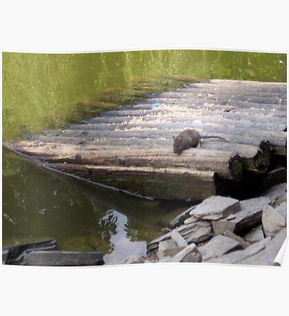 Mouse On Log Raft Poster