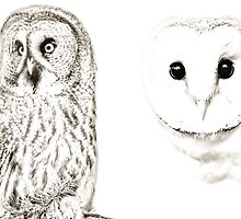 Barn Owl and Great Grey owl by Dave  Knowles