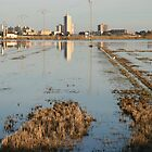 City of Valencia viewed from across the rice fields by eeek