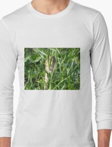 Hide-N-Seek Long Sleeve T-Shirt