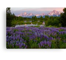 Field of Lupine and the Tetons Canvas Print