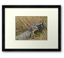 Gator At Dinnertime Framed Print