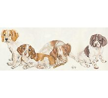 Brittany Spaniel Puppies Photographic Print